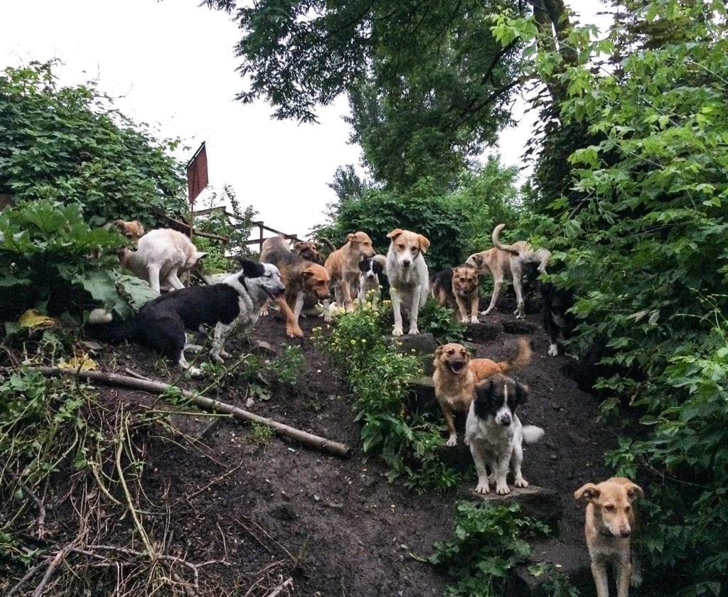russische-hunde-straßenhunde-tierheim-adoption-vermittlung-von-haustieren-hilfe-spenden-1