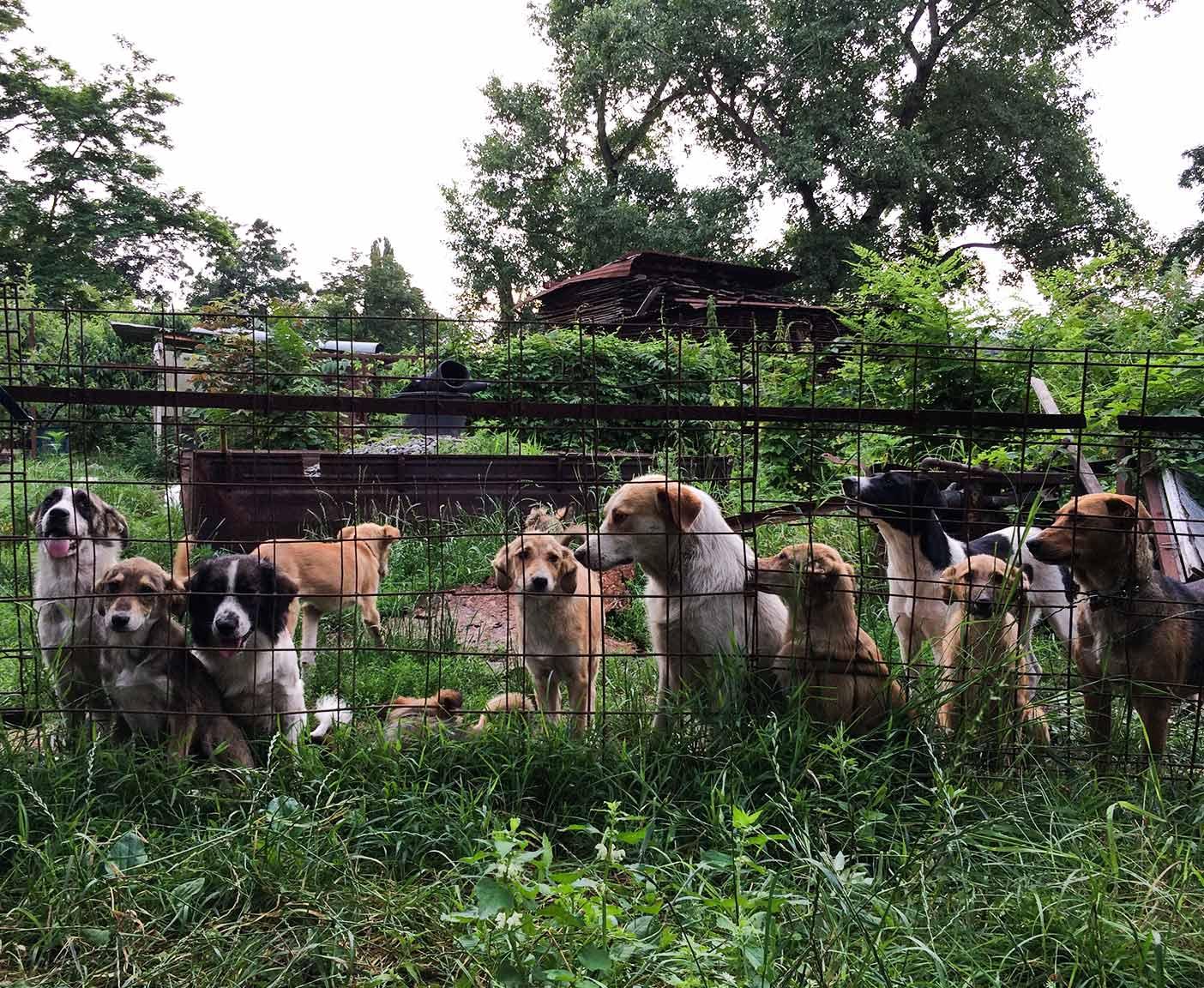 russische-hunde-straßenhunde-tierheim-adoption-vermittlung-von-haustieren-hilfe-spenden-12