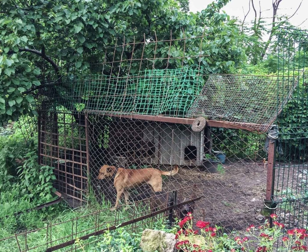 russische-hunde-straßenhunde-tierheim-adoption-vermittlung-von-haustieren-hilfe-spenden-15