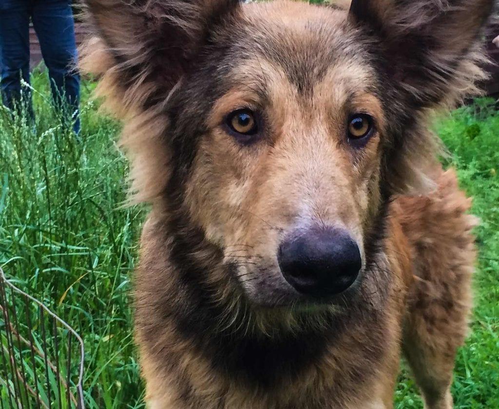 ussische-hunde-straßenhunde-tierheim-adoption-vermittlung-von-haustieren-hilfe-spenden-2