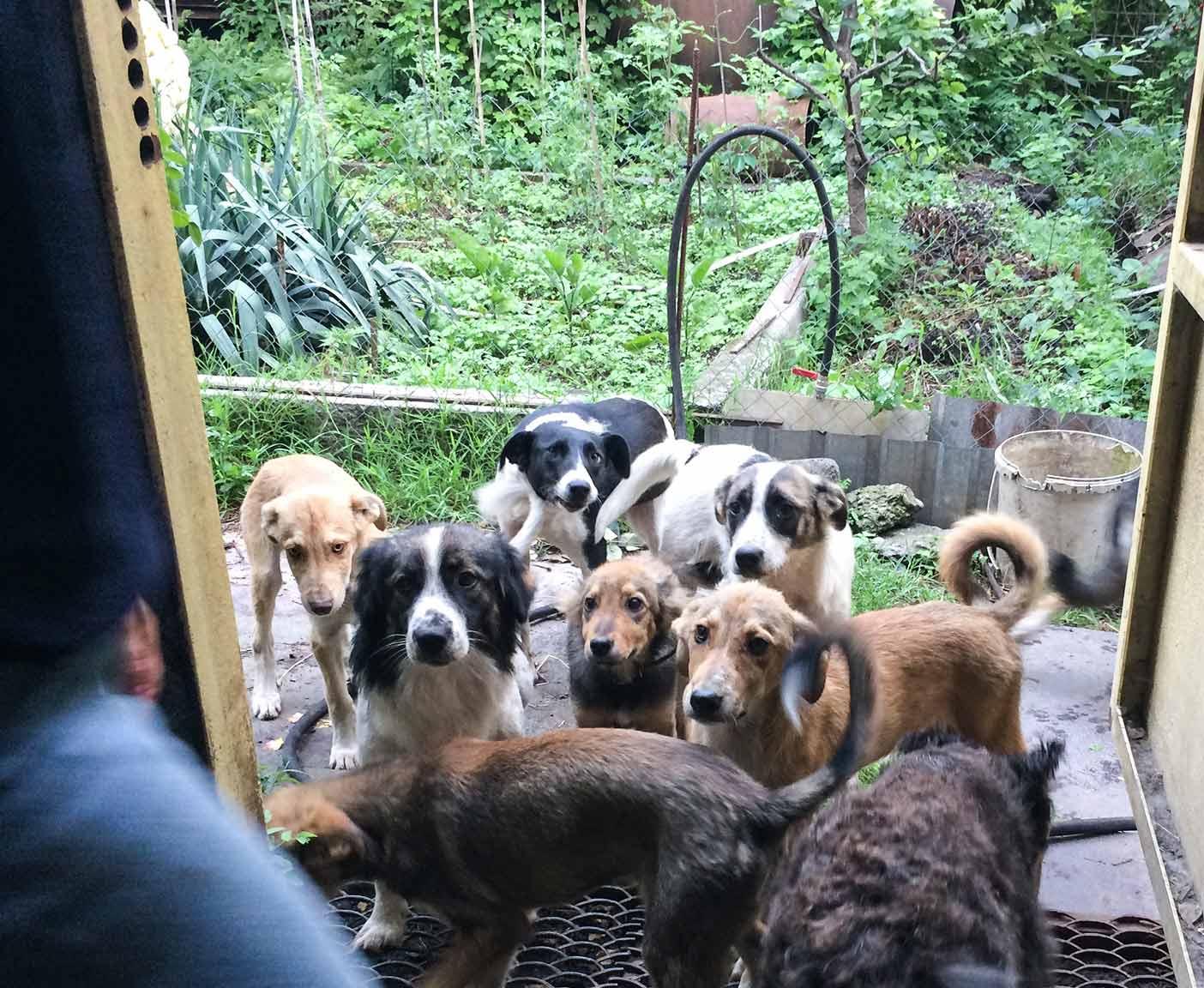 russische-hunde-straßenhunde-tierheim-adoption-vermittlung-von-haustieren-hilfe-spenden-4