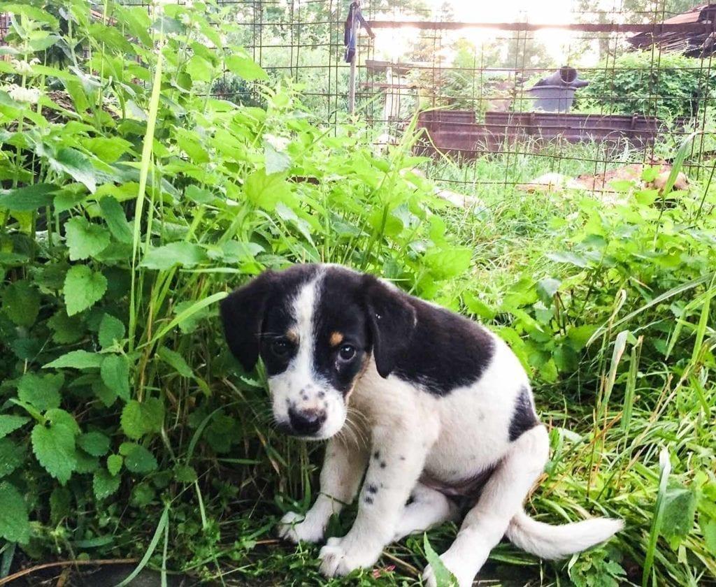 russische-hunde-straßenhunde-tierheim-adoption-vermittlung-von-haustieren-hilfe-spenden-9