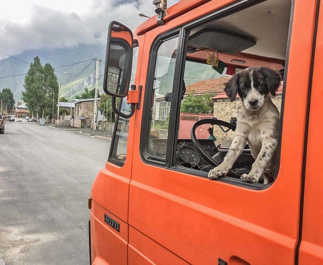 russische-hunde-straßenhunde-tierheim-adoption-vermittlung-von-haustieren-hilfe-spenden16