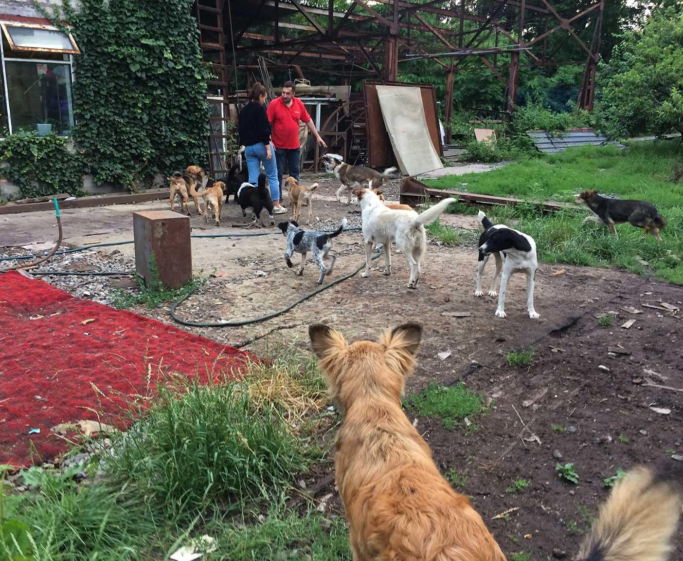 russische-hunde-straßenhunde-tierheim-adoption-vermittlung-von-haustieren-hilfe-spenden8
