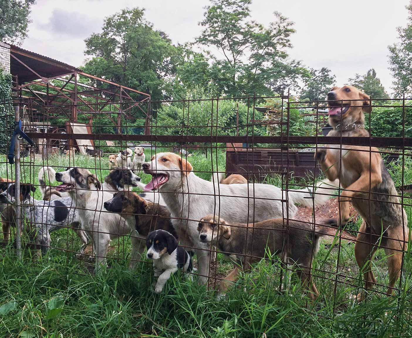 russische-hunde-straßenhunde-tierheim-adoption-vermittlung-von-haustieren-hilfe-spenden-14