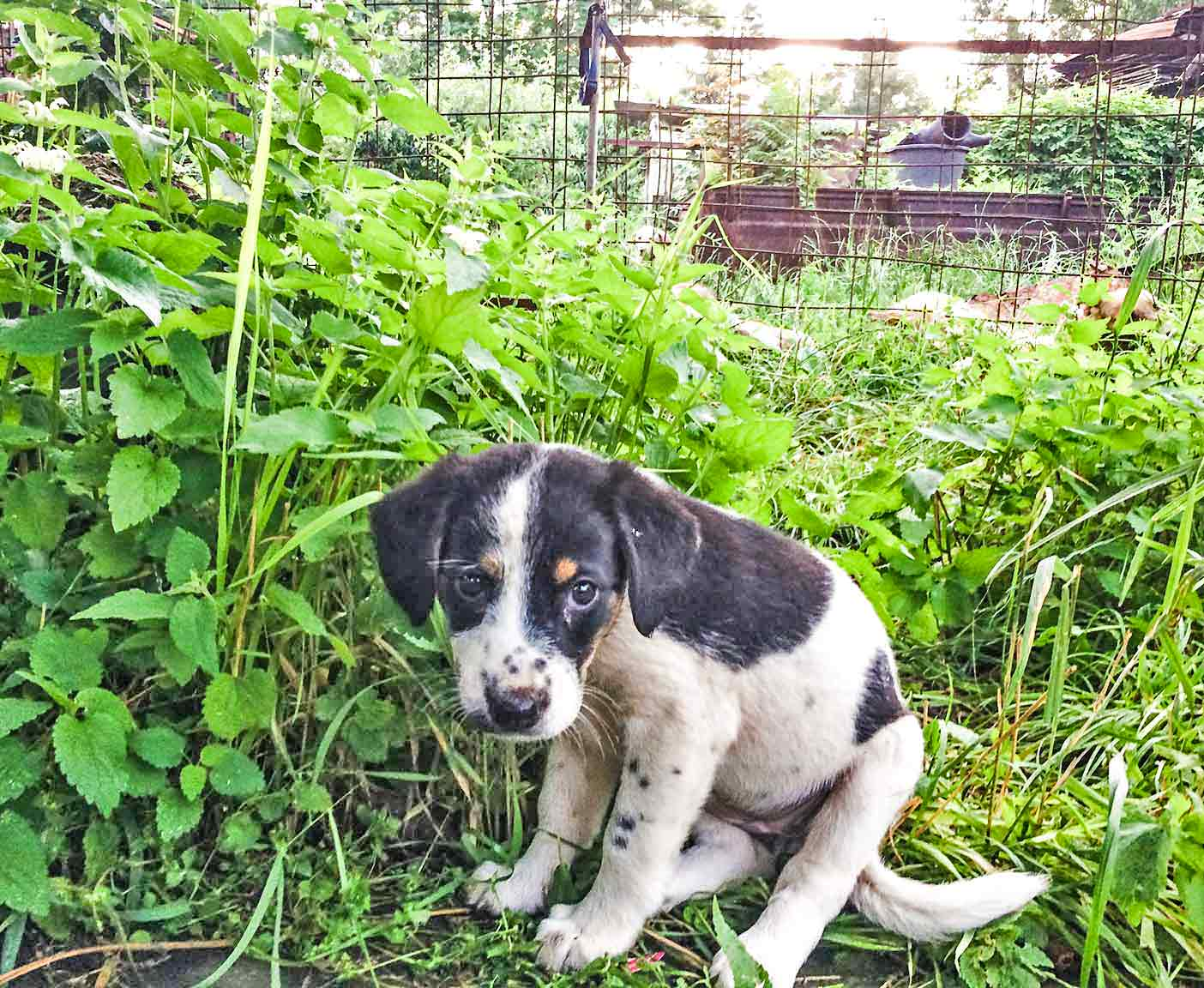 russische-hunde-straßenhunde-tierheim-adoption-vermittlung-von-haustieren-hilfe-spenden-17