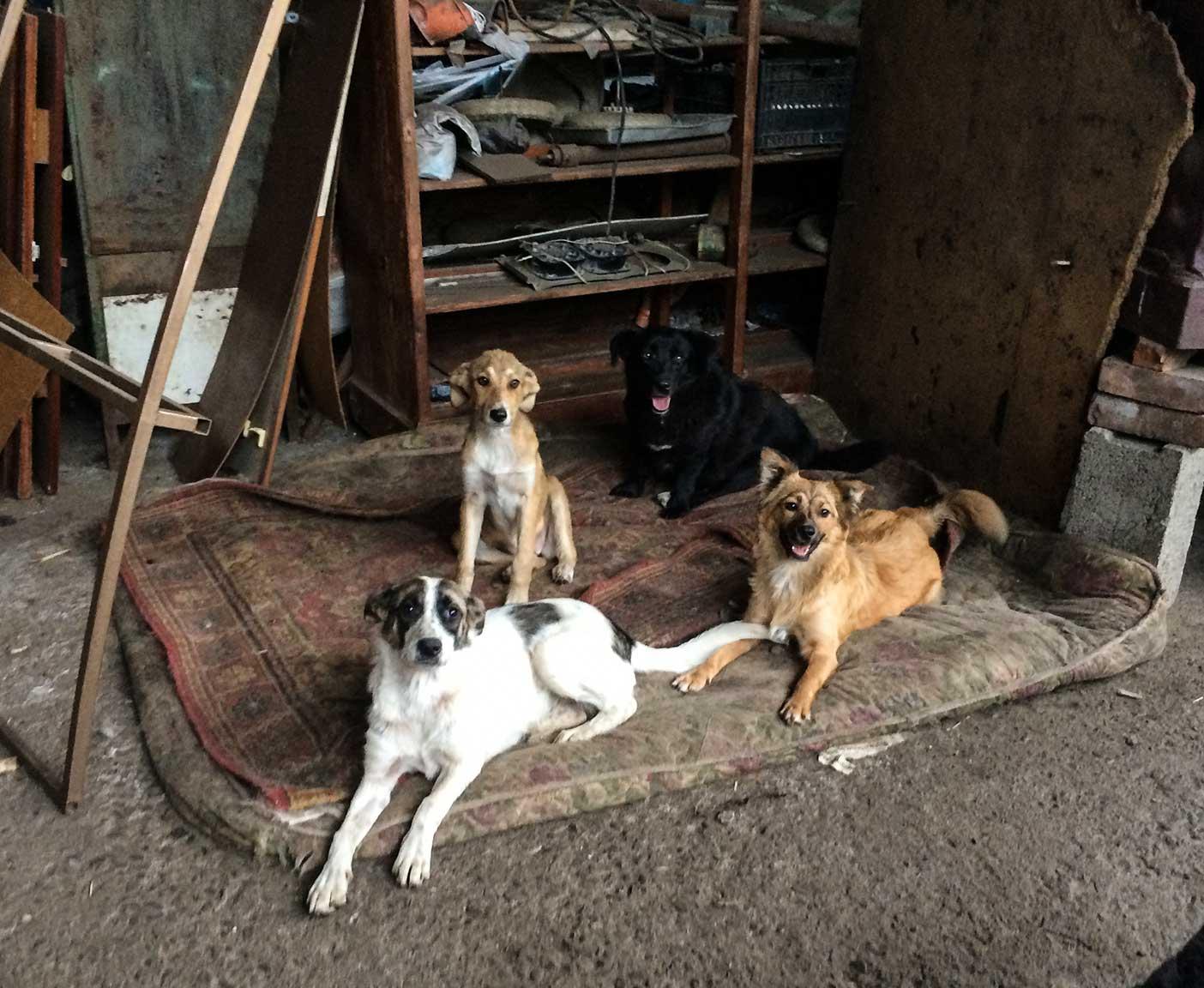 russische-hunde-straßenhunde-tierheim-adoption-vermittlung-von-haustieren-hilfe-spenden-7