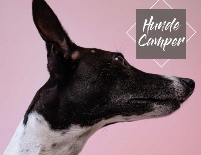 hund-im-wohnmobil-reise-tierarzt