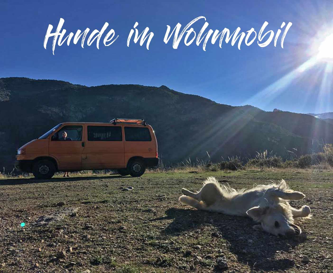 hunde-im-wohnmobil-frankreich-regeln-transport-heimtierpass