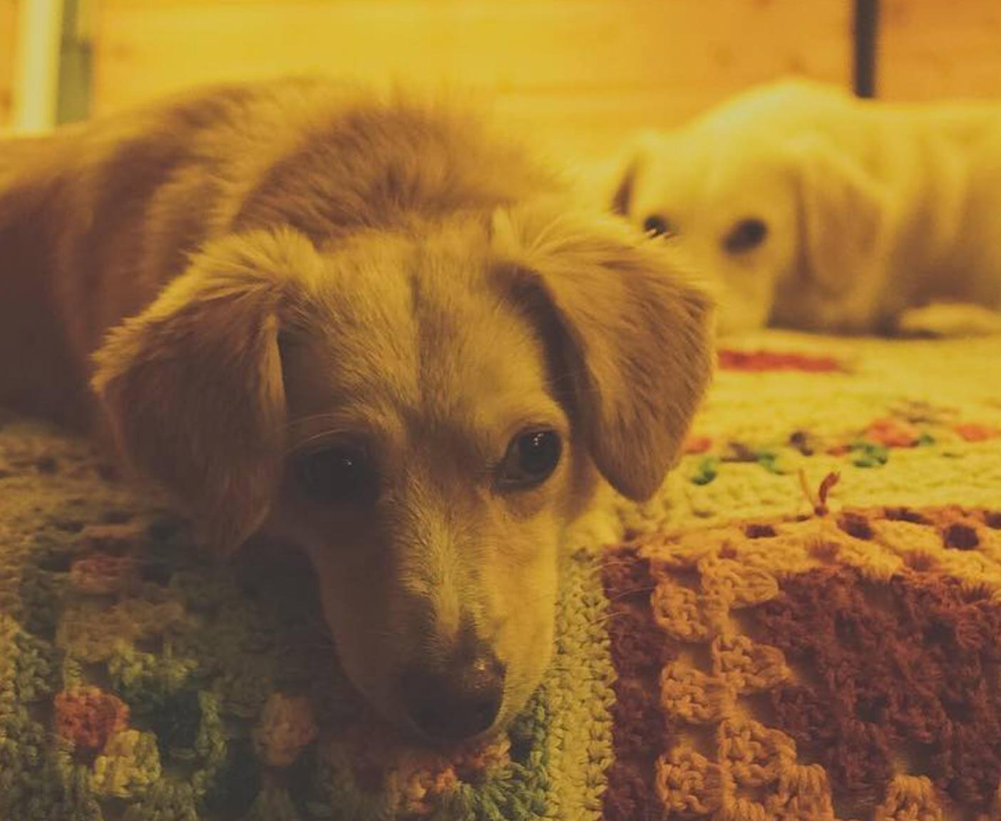 vw-lt-28-mywanderingisland-youtube-strassenhund