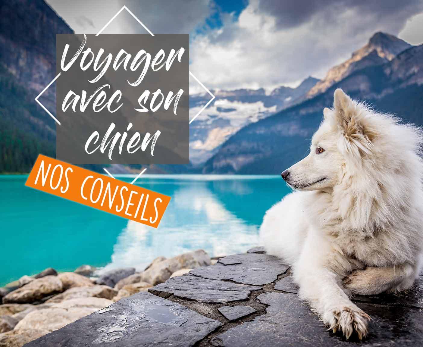 voyager-voyage-chien-van-amenage-fourgon-chiot-liste-passeport-campingcar-roadtrip-vanlife-europe